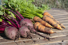 Root vegetables. Carrots and beetroot on garden table Stock Images