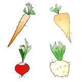 Root Vegetables Stock Photos