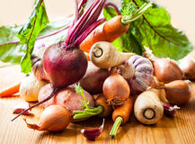 Root vegetables. Assorted types of root vegetables Royalty Free Stock Photos