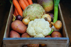 Root vegetables. In a box Royalty Free Stock Image
