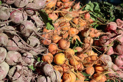 Root vegetables at the farmers market Royalty Free Stock Photos