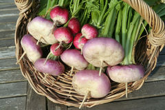 Free Root Vegetables On Basket Royalty Free Stock Photography - 12729747