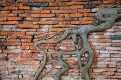 The root wall. Royalty Free Stock Photos