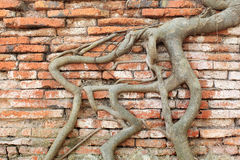 Root wood covered brick wall Stock Photography