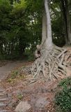 Rooted - Rissen - HH - Germany royalty free stock photos