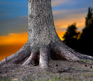 Rooted tree Stock Photo