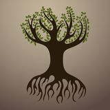 Rooted Tree Royalty Free Stock Photography