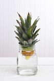 Rooting a Pineapple Top Stock Image
