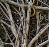 Rootlet stock photo
