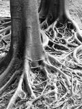 Roots Royalty Free Stock Photos