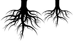 Roots. Icon of two undergrounds black roots on white background Stock Photos