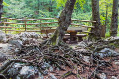 Roots. royalty free stock images