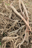 Roots background Royalty Free Stock Photos