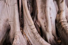 Roots background Royalty Free Stock Images