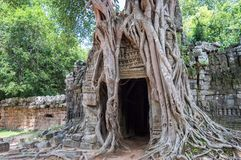 Roots of a banyan tree at Ta Prohm temple in Angkor, Siem Rep Cambodia stock photos