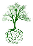 Roots brain Royalty Free Stock Images