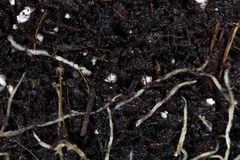 Roots in brown garden soil Royalty Free Stock Images