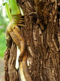 Roots climb on tree. Royalty Free Stock Photography