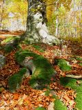 Roots covered with moss Stock Photo