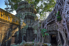 Roots covering the ruin of Ta Prohm temple Stock Photography