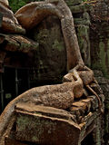 Roots covering stones of Angkor Wat temple Stock Photography