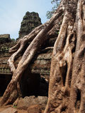 Roots covering stones of Angkor Wat temple Stock Photo