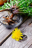 Roots of dandelion flower. Flower of dandelion and its root is harvested for medicinal purposes stock photography