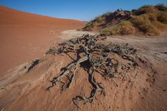 Roots of a dead tree, Sossusvlei, Namibia Royalty Free Stock Photos