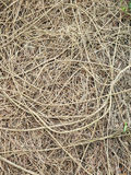 Roots with fertile soil background Stock Photos