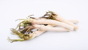 Roots of fresh peeled horseradish on white background, healthy foods and lifestyle Stock Photo