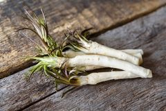 Roots of fresh peeled horseradish on a wooden surface, healthy foods Royalty Free Stock Photo