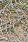 The roots. Royalty Free Stock Photos