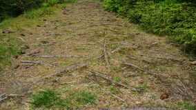 Roots growing all over grass covered path royalty free stock photo