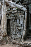 Roots growing on ruins, Ta Prohm temple, Angkor Wat Stock Images