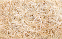 Roots of lawn grass Stock Photography