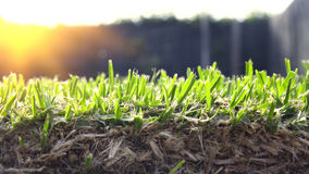 The roots of the lawn Stock Photography