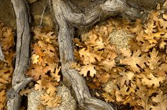 Roots and Leaves Royalty Free Stock Images