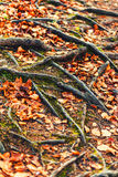 Roots and leaves Stock Image