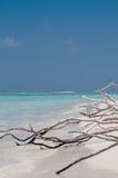 Tree roots exposed on sandy ocean beach Stock Photo