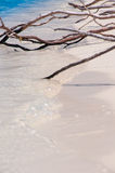 Tree roots exposed on sandy ocean beach Stock Photography