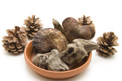 Roots and nutshells Royalty Free Stock Images
