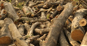 Roots of old dry tree stock video