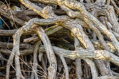 Endless roots