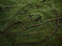 Roots over the ground. Summer moss at toshodaiji stock image