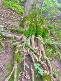 Roots. Reaching searching crossing paths Royalty Free Stock Photography