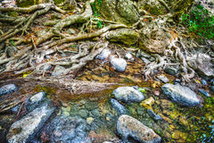 Roots and rocks in Triulintas waterfall Royalty Free Stock Photo