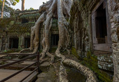 Roots and ruins Stock Photos