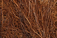 Roots. Small tightly intertwined tree roots Royalty Free Stock Photos