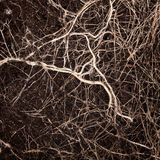 Roots in a soil Stock Photo