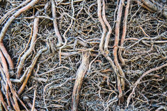 Roots and soil Stock Photography